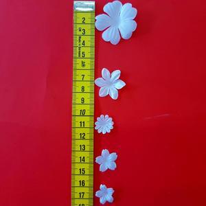 Kwiatki  -